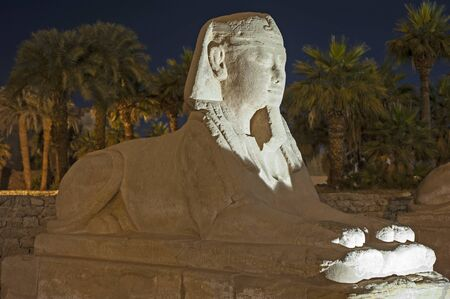 Statue at avenue of sphinxes in ancient egyptian Luxor Temple lit up during night