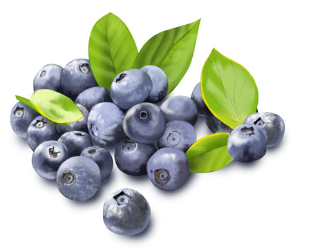 Bosbessen plant with fruit