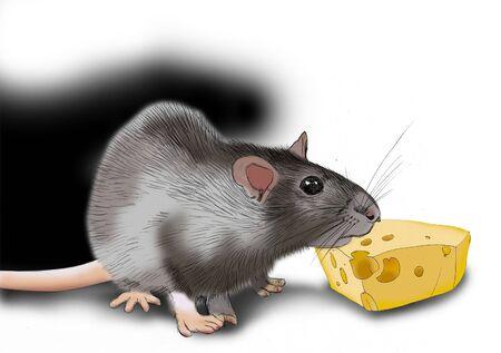 치즈와 회색 쥐