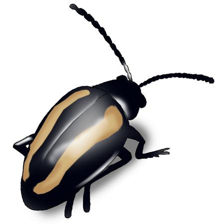 Earth fleas