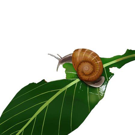 녹색 잎에 달팽이입니다. 일러스트