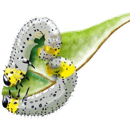 Caterpillar (Nematus ribesii or Pteronidea ribesii) Ilustrace