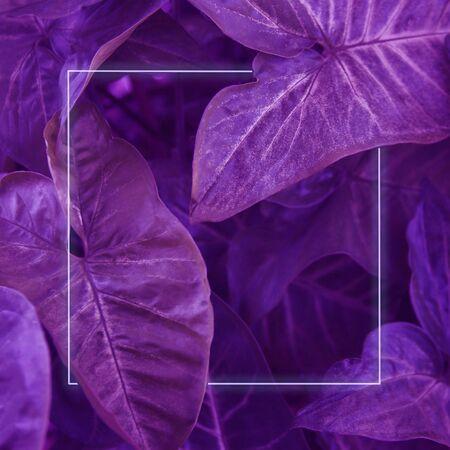 large green leaves. leaf design background. square photo