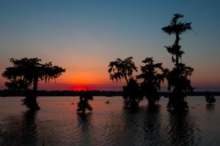 bayou: Kayaker on Lake Martin, Louisiana
