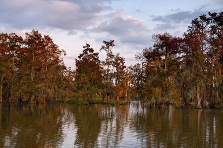 bayou swamp: Lake Martin swamp just after sunrise   Lake Martin is located in Breaux Bridge, Louisiana in the heart of Cajun Country