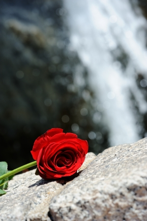 Red Rose in front of a waterfall Stock fotó