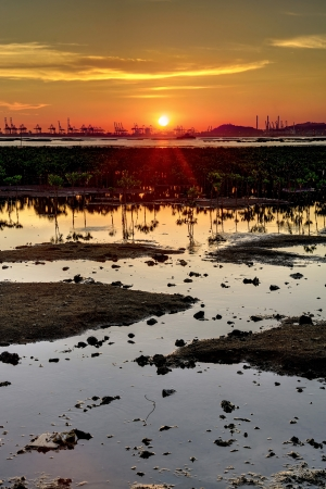Sunset on the wetland in Hong Kong Stock Photo - 16832098