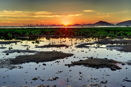 Sunset on the wetland in Hong Kong photo