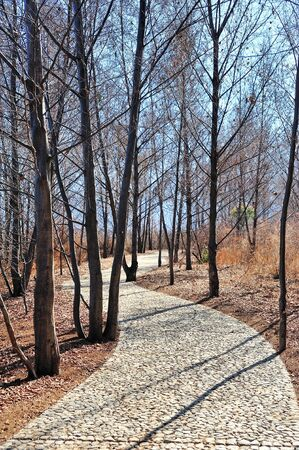 stone path: Stone path in a forest Stock Photo