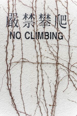 ivy vine: No Climbing English and Chinese word on wall
