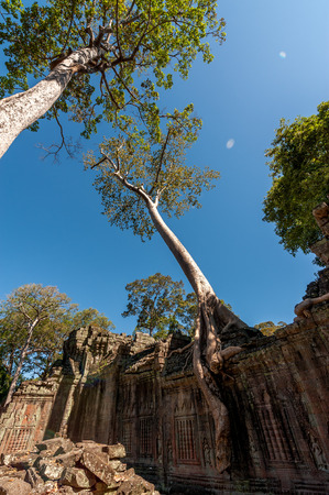 Tall tree growth on ruin