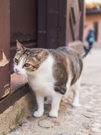 BARCELONA, SPAIN - SEPTEMBER 21: Cat in territory of unique architectural complex Poble Espanyol the Spanish village on September 21, 2017. Editorial