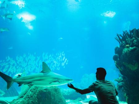 Man watching fish through the glass in Oceanarium. Reklamní fotografie