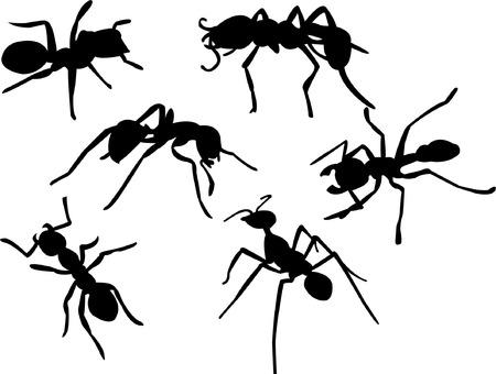 hormiga: colecci�n de silueta de hormiga  Vectores