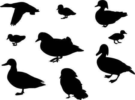 mallard: duck silhouette collection   Illustration