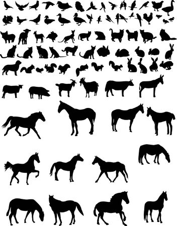 animals collection Stock Vector - 7881803