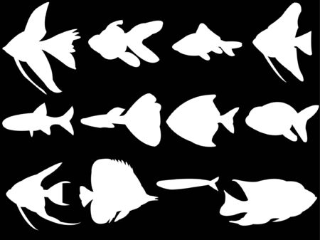 freshwater barracuda: aquarium fish white silhouette  Illustration