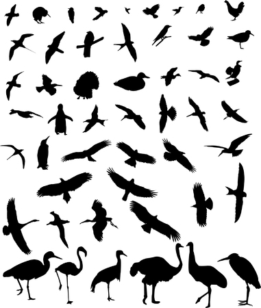 the ostrich: birds silhouette collection  Illustration