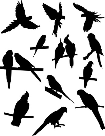 flying geese: parrots silhouette collection  Illustration