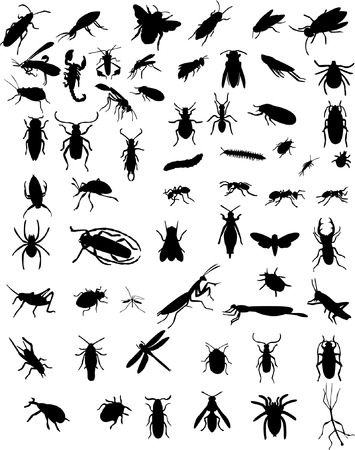 collection of 60 bugs