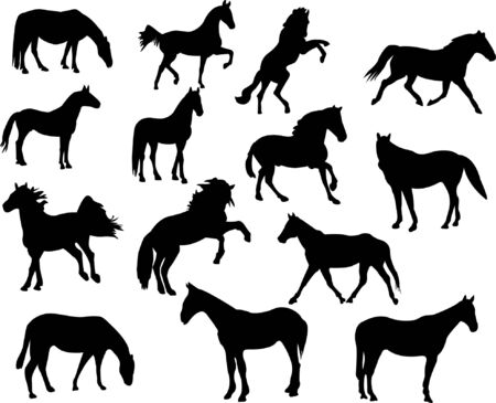collection of high quality horse silhouettes  Stock Vector - 8095003