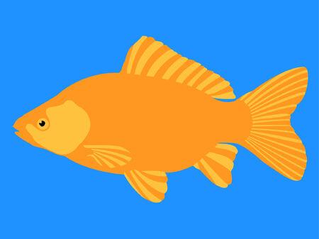 gold fish Stock Vector - 8095007