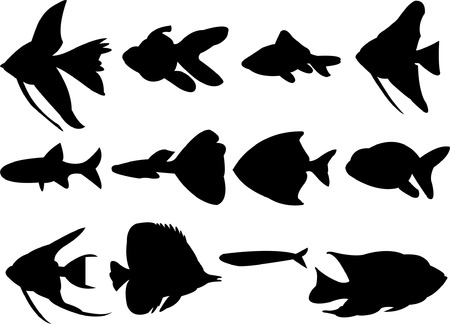 freshwater clown fish: collection of aquarium fish silhouette   Illustration