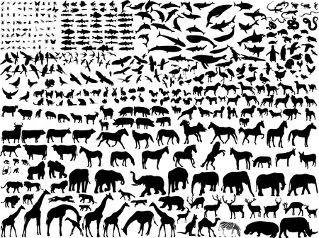 big collection of different animals silhouette Vector