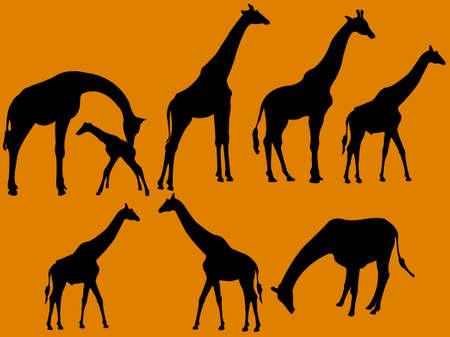 Giraffe collectie silhouet