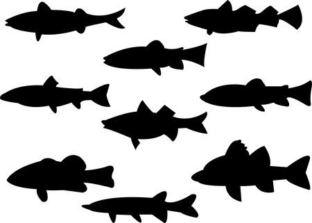 carp fishing: raccolta di pesci silhouette  Vettoriali