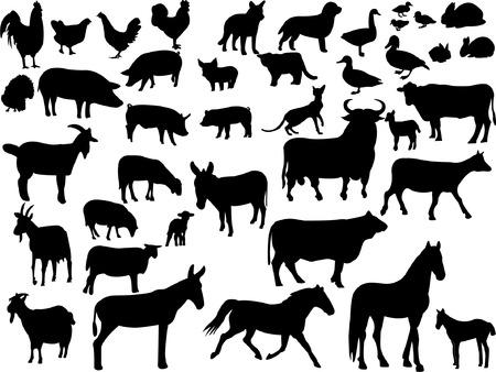 farm animals collection Stock Vector - 8572437