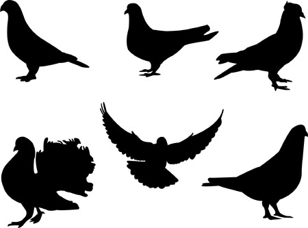 pigeon: pigeon silhouette - vector