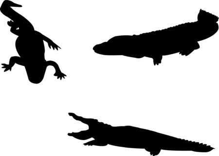 crocodiles collection Vector