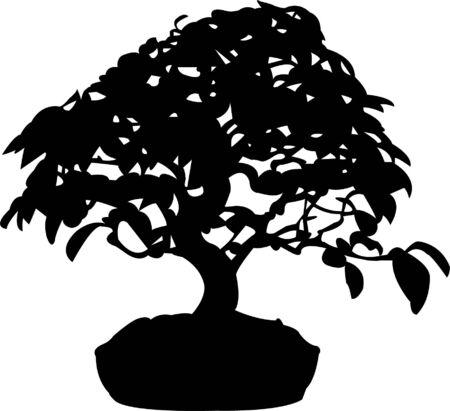 bonsai silhouette  Vector