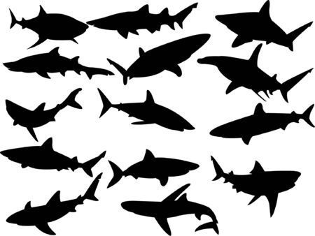 collection of sharks silhouette  Vector