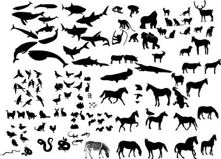 loutre: collection de silhouette animaux