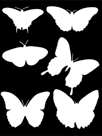 collection of butterfly silhouette  Vector
