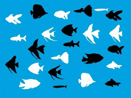 aquarium fish silhouette - vector Vector