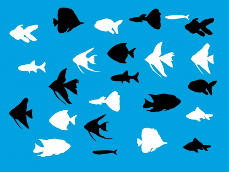 peces de acuario: silueta de peces de acuario - vector Vectores