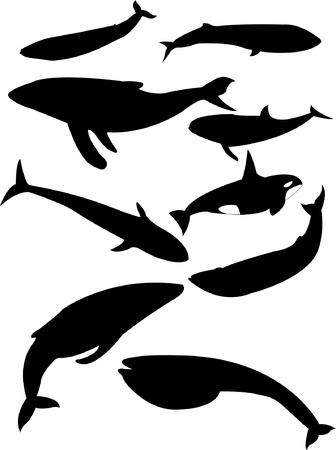 humpback: whales collection - vector