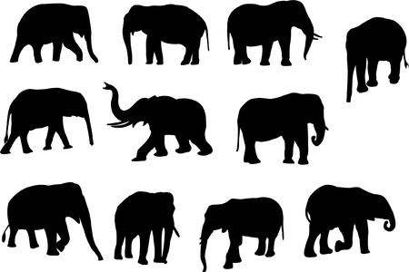 siluetas de elefantes: colecci�n de elefantes - vector