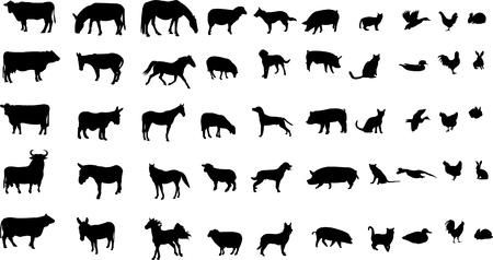 black sheep: animales de granja - vector Vectores