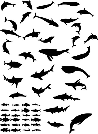 sea animals - vector Vector