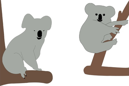 illustration of koalas - vector Vector