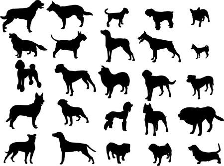 cocker: Sammlung von Hunden