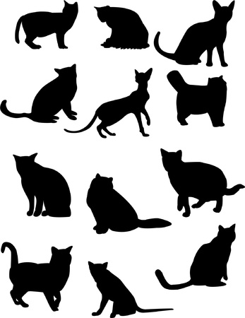 cat silhouette: Cat silhouette