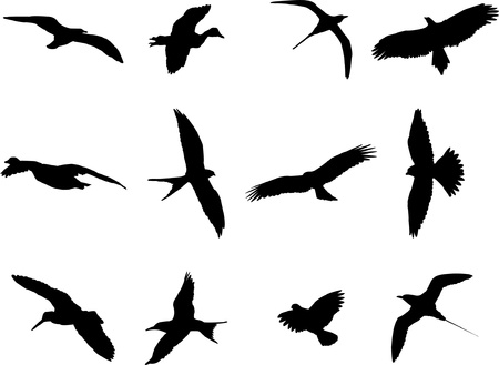 gulls: Birds silhouette collection - vector