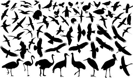 dieren: verzameling van vogels.