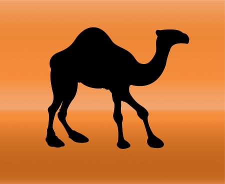 camel silhouette with background  Vector