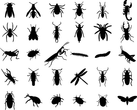 scarab: Set of bugs silhouette - vector